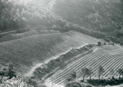 village wine2