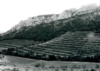village wine4