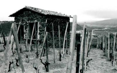 village wine5
