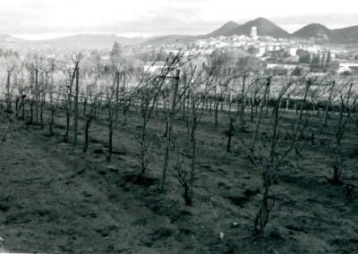 village wine6