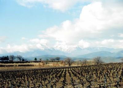 village wine7